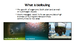 What is biofouling The growth of organisms (both plant and animal) on submerged objects