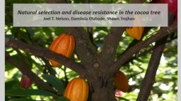 Natural selection and disease resistance in the cocoa tree