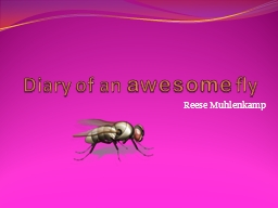 Diary of an  awesome  fly