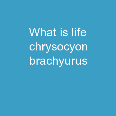 What is Life? Chrysocyon brachyurus