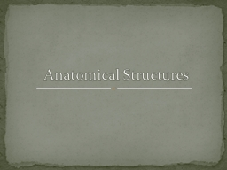 Anatomical Structures Acromioclavicular