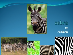 zebra By   Ashleigh My animal's diet