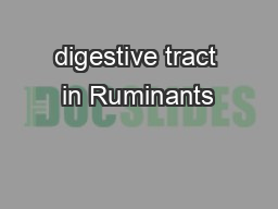 digestive tract in Ruminants