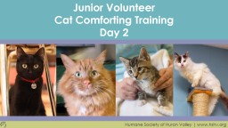 Junior Volunteer Paw 2 Cat Comforting Training