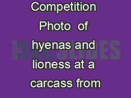 Competition Photo  of hyenas and lioness at a carcass from PowerPoint PPT Presentation
