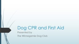 Dog CPR and First Aid