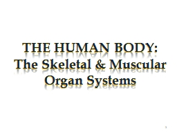 THE HUMAN BODY: The Skeletal & Muscular Organ Systems