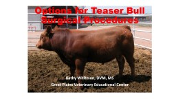 Options for Teaser Bull Surgical Procedures