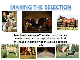 Selective breeding —The selection of certain seeds or animals for reproduction so that the next generation has the same desirable traits.