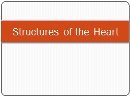 Structures of the Heart Chambers