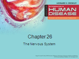 Chapter 26 The Nervous System
