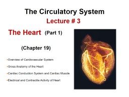 The Circulatory  System Overview of Cardiovascular System