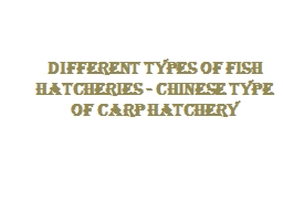 Different types of fish hatcheries - Chinese type of carp hatchery