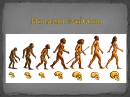 Hominin  Evolution Humans share