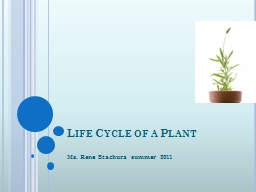 What do you know about the life of a plant?