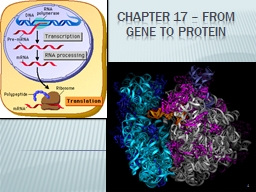 Chapter 17 – from gene to protein