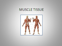 MUSCLE TISSUE Muscle Tissue Characteristics