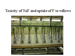 Toxicity of  NaF  and uptake of F to willows