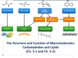 1 The Structure and Function of Macromolecules: