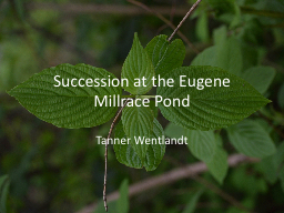 Succession at the Eugene Millrace Pond