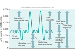 Volumes Tidal Volume (TV) = volume of air during one resting respiratory cycle.