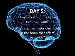 DAY  5: How do cells in the brain communicate?