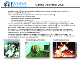 Canine Distemper Virus Canine Distemper CD is a highly