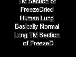 TM Section of FreezeDried Human Lung Basically Normal Lung TM Section of FreezeD