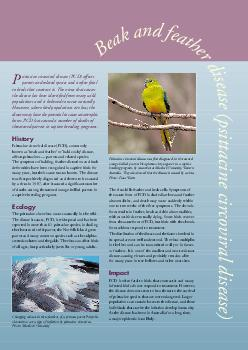 sittacine circoviral disease PCD affects parrots and related species and is often fatal to birds that contract it