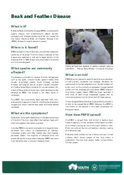 Beak and Feather Disease WHAT IS IT Psittacine Beak and Feather Disease PBFD is a potentially deadly disease that affects parrots cockatoos and lorikeets psittacine birds PowerPoint PPT Presentation
