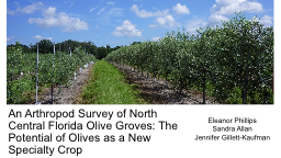 An Arthropod  Survey of North Central Florida Olive Groves: The Potential of Olives as a New Specia