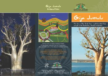 The story of the  Boab Tree  a gift from the Gija people in the Kimbe