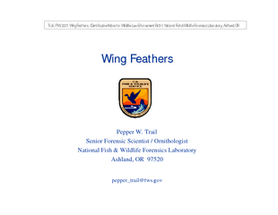 Wing Feathers Wing Feathers Pepper W