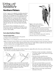 Flickers will return year after year to the same house because it works for them; they attract a mate this way. Thus,To discourage drumming, try a combination of the following strategies:Scare activity (Fig. 6). When using scare tape, strengthen each stri