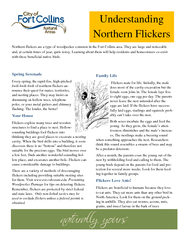 Understanding Northern Flickers Northern flickers are a type of woodpecker common in the Fort Collins area. They are large and noticeable and, at certain times of year, quite noisy. Learning about them will help residents and homeowners co-exist  ...