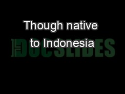 Though native to Indonesia PDF document - DocSlides