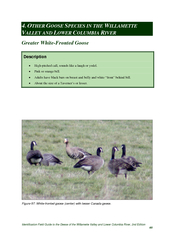 Identification Field Guide to the Geese of the Willamette Valley and L