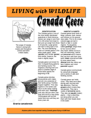 I The Canada goose is one of the most widely distributed waterbirds in