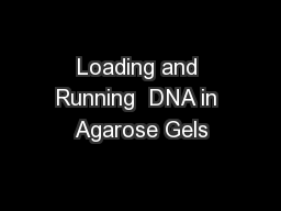 Loading and Running  DNA in Agarose Gels