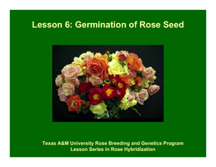 Lesson 6: Germination of Rose Seed