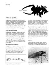 FUNGUS GNATSFungus gnats are small gray-black ies of the Sciaridae y